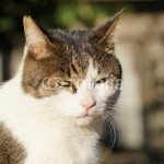 fotoliaで売れたネコの写真