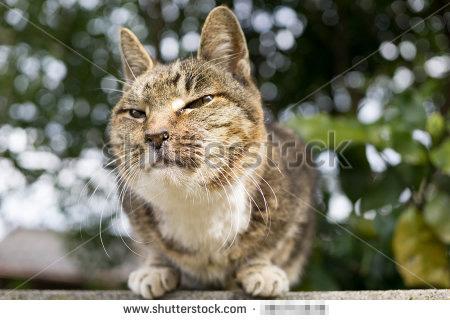 売れた猫写真