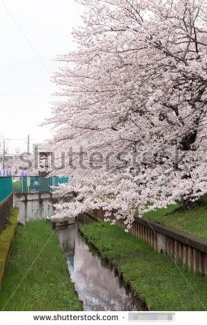 5月に売れた桜の写真(タテ)