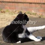 photolibraryで売れた猫の写真