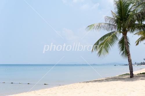 ベトナムのビーチの写真