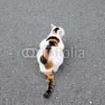 三毛猫の背中